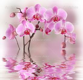 розовая орхидея с водой отражения