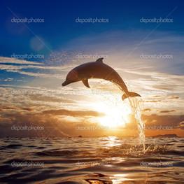 красивый дельфин прыжок вода