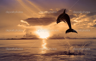 дельфин на закате прыжок