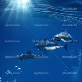 семья дельфинов в Красном море