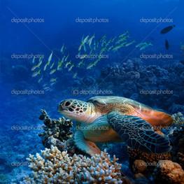 море подводный мир черепаха