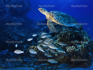 группа рыб и черепаха