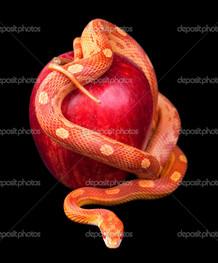 красная змея и яблоко