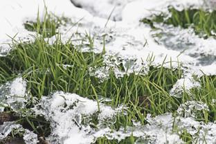 трава лёд