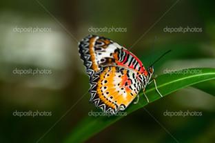 бабочка на травинке