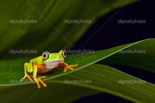 маленькая лягушка