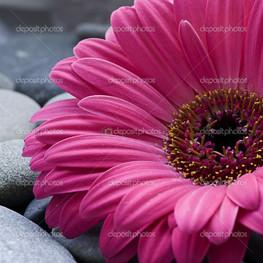 малиновый цветок