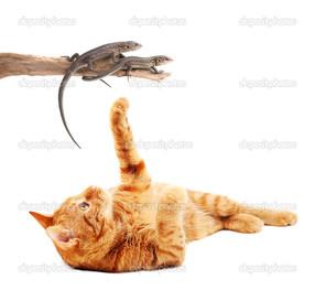 кот и ящерицы на белом фоне