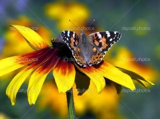 на жёлтом цветке