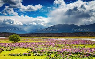 равнина с цветами