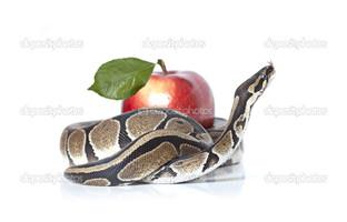 змея яблоко белый фон