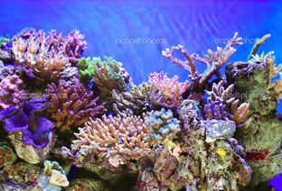 подводная жизнь кораллы