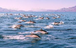 дельфины на воле