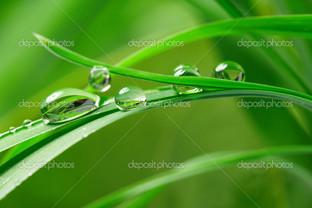 капли зеленая трава