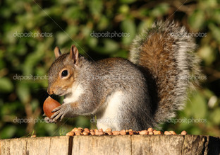 белка и орешки
