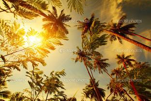 солнце сквозь пальмы