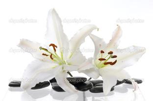 белая лилия и камни