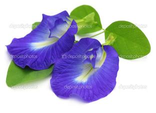 Апараджита цветок