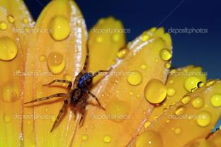 паук на жёлтом цветке