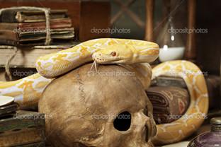 змея на черепе