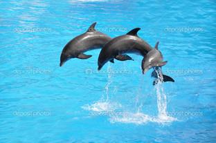 три дельфина