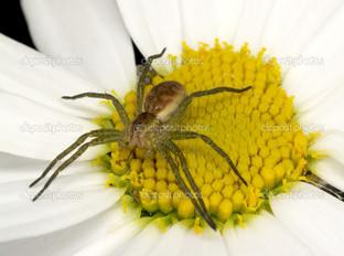 паук на цветке