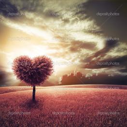 сердце в поле закат