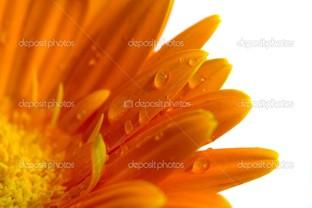 часть цветка