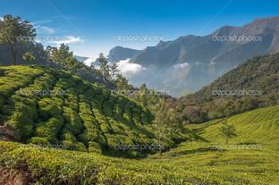 чайные плантации в Индии горы