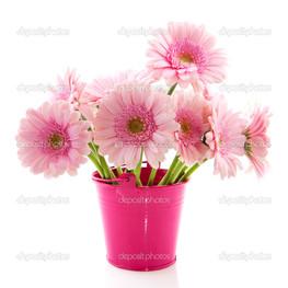 розовое ведро и цветы