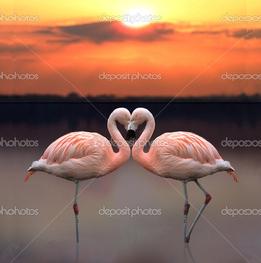 любовь фламинго