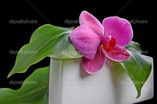 орхидея отдыхает