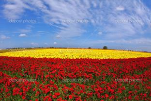 поляна цветов красный желтый