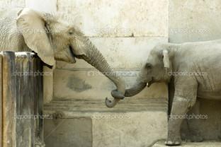 любовь слонов