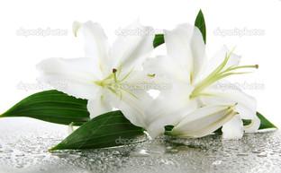 белые лилии брызги воды