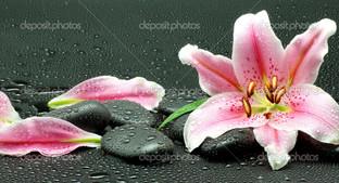 лилия на чёрных камнях
