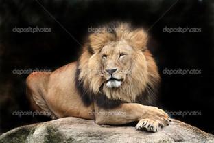 лев на чёрном фоне