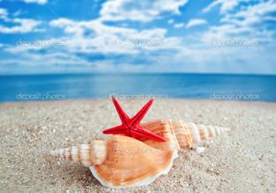 ракушки и морская звезда на пляже