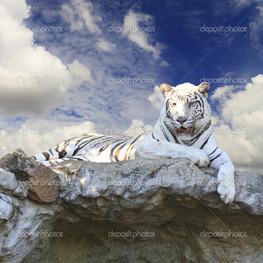 Белый тигр в голубой небо