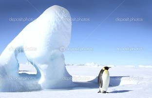 император пингвин