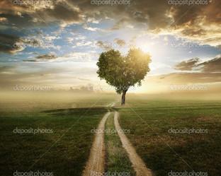 дорога к сердцу
