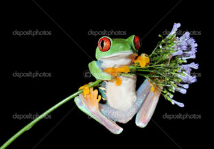 лягушка цветок чёрный фон
