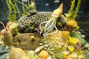 подводный мир каракатица