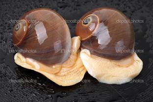 спираль ракушки две улитки