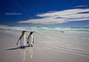 лето Королевские пингвины