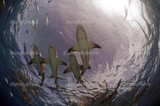 акулы вид с низу