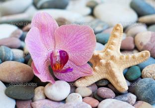 орхидея и звезда