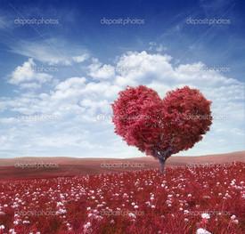 красное поле дерево сердце