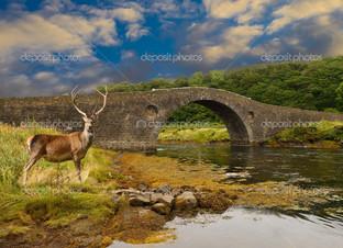 олень и мост