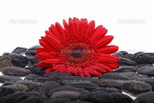 красный цветок на чёрных камнях